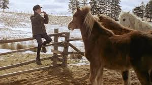 Pit Pony 1997